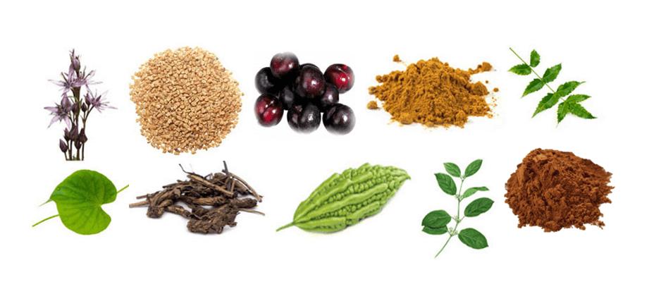 diabetes_herbs